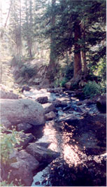 Mountain stream and trees